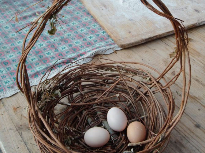foto uova